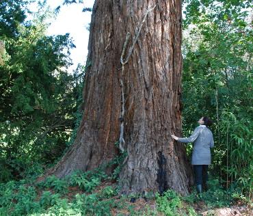 Sequoia-COL DROITE-370x316
