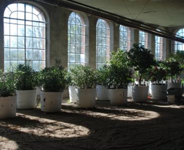 Orangerie interieur- 370