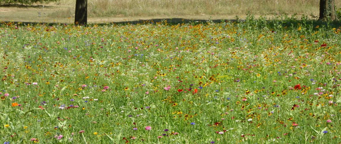 Jardin paysager definition avignon 1332 - Mobilier jardin waterloo villeurbanne ...