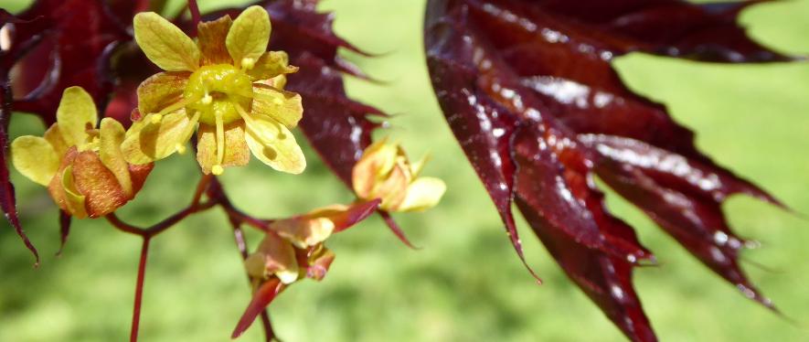 Choix de végétaux remarquables